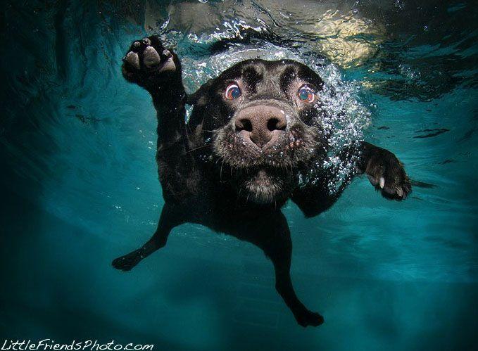 Cães subaquáticos!