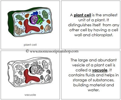 25+ best ideas about Plant cell parts on Pinterest | Cell ...