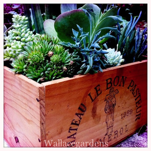 50 best wine themed images on pinterest wine cellars for Wooden wine box garden