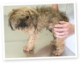 I want Oscars Law!! Please help stop puppy farming.. Adopt from a shelter please dont buy your pets from a pet store