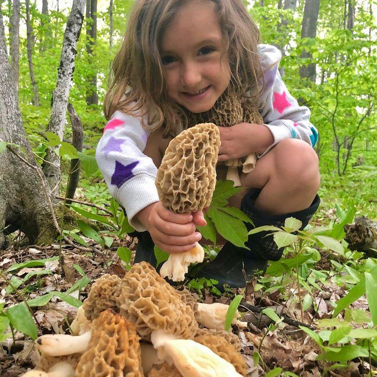 Cheers to morel mushroom season morel morelmushrooms