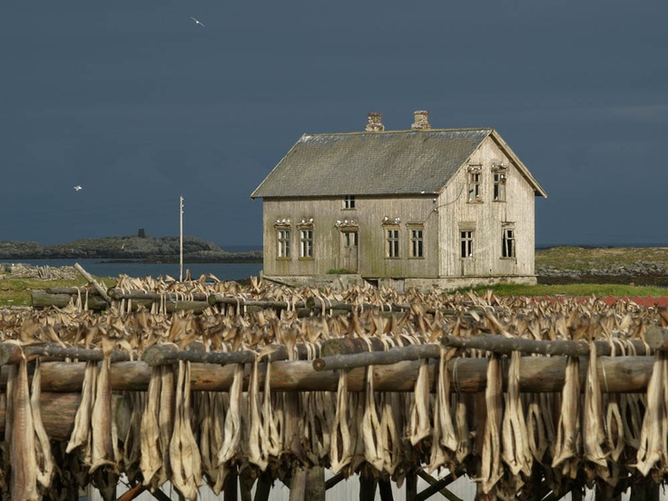 An abandoned house on the island of Røst in northern Norway. Fish hanging to dry.