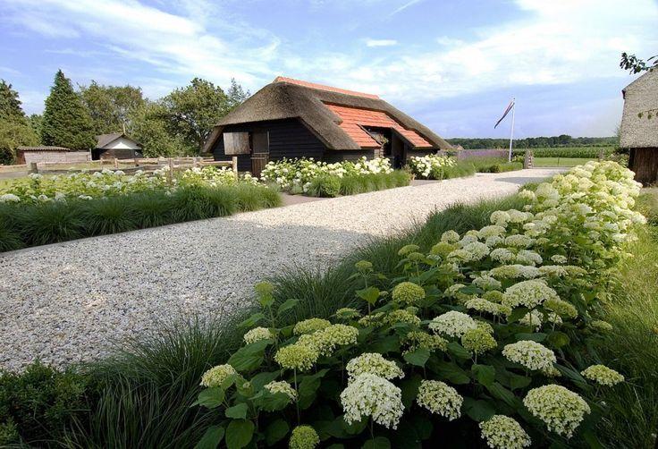 Landelijke tuin met hortensia's.