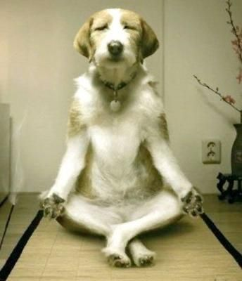 Zen dog.
