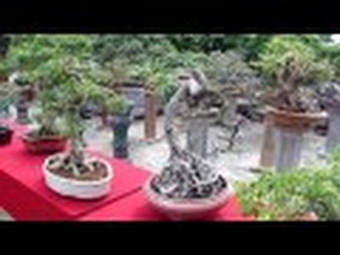 EXHIBITION    BONSAI    TRI    AE    TREE    DISPLAY