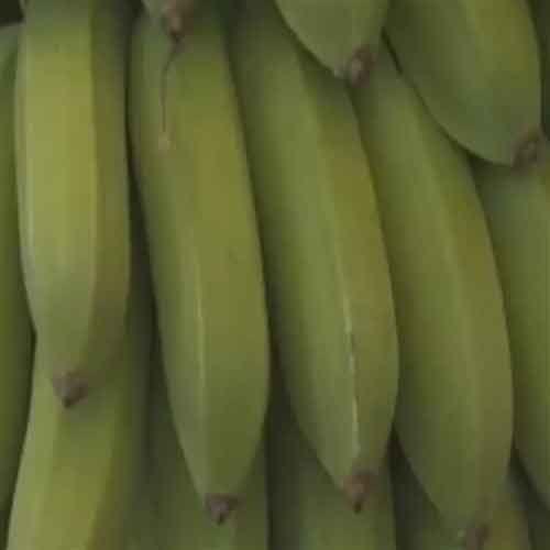 Le banane sono uno dei frutti più apprezzati nel mondo