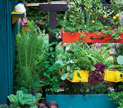 Collection of your vegetable garden