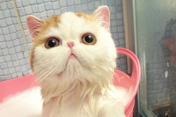 Quite Possibly The Cutest Kitten Video In The History Of The Internet - BuzzFeed Mobile