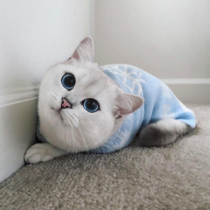 Este Gato Tem Os Olhos Mais Bonitos Do Mundo