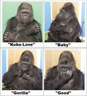 Gorillas and Sign Language