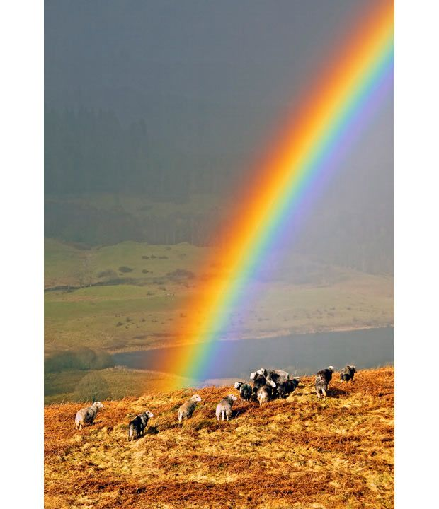 rainbows=God's Promises- everythings gonna be fine!