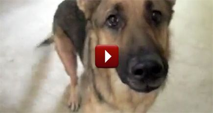 This Funny Talking Dog Got Pranked... and It's Going to Make You Laugh - Funny Video