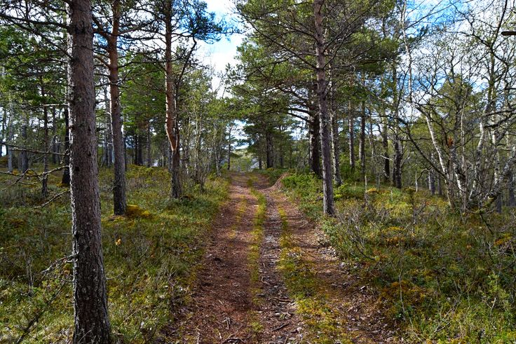 Hiking along a nice forest road outside Bodø City