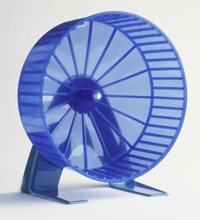 Find out what the best and safest hamster wheel options are.