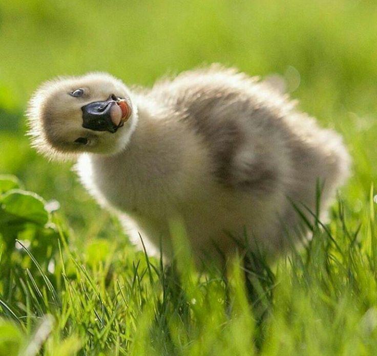 Love ducklings!