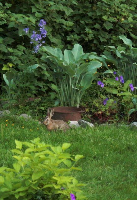 Herkkupurkki: valokuva, garden, rabbit