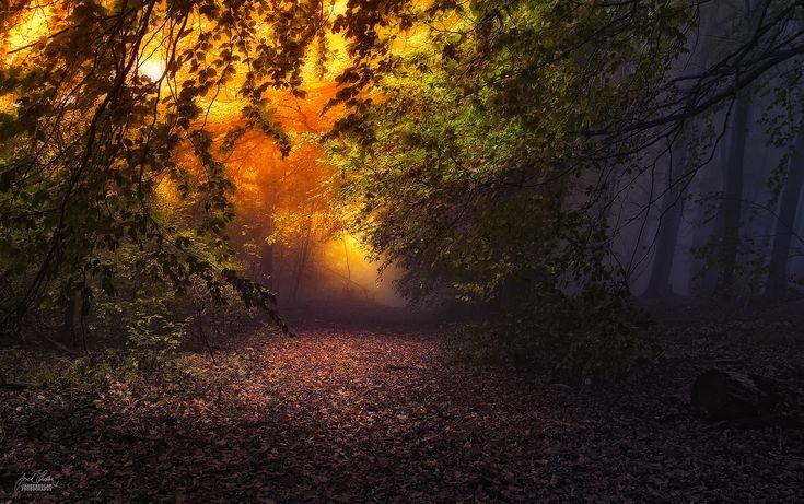 Magic Forest in the Czech mountains, Czech Republic.
