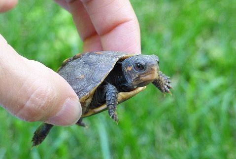 What Foods Do Baby Turtles Eat?   Cuteness.com
