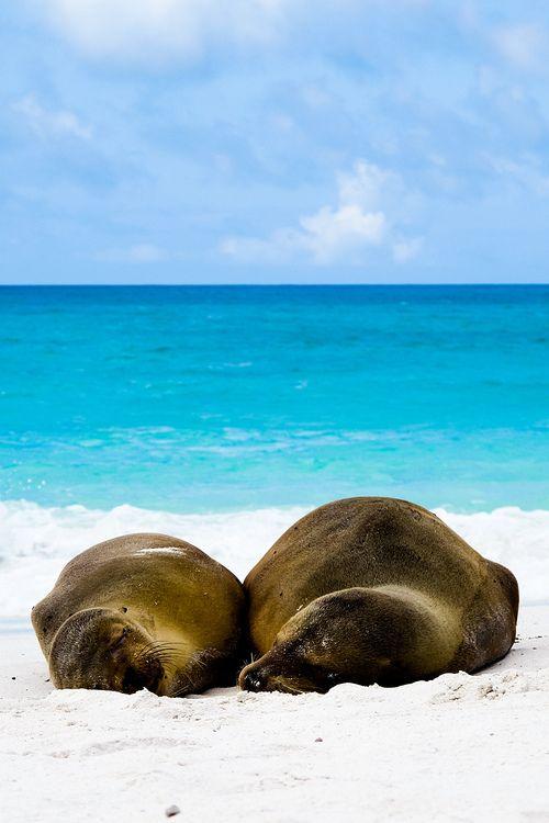 Reisfotografie natuurfotografie zeeleeuw zeehond Galapagos Ecuador. Foto door Marijke Krekels fotografie