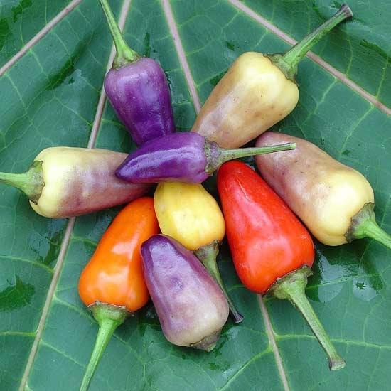 1518 best gardens images on pinterest vegetable garden - Best romanian pepper cultivars ...