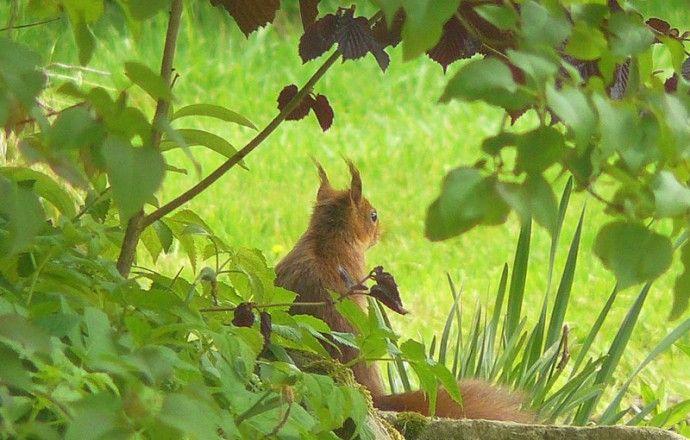 écureuil dans le parc