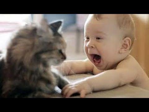 Gracioso Video De Bebes Riendose De Sus Gatitos.. Imperdible!!