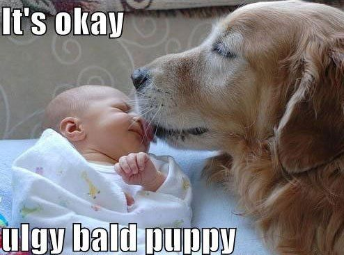 Very cute!!: Kiss, Funny Dogs, Best Friends, Ug Bald, Pet, Bald Puppies, Baby, I Love Dogs, So Sweet