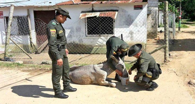 Salvaguardar la vida es nuestro principal #Compromiso Este animalito se encontraba en estado de deshidratación.