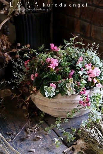 ブリキハウス。。。白い寄せ植え の画像 フローラのガーデニング・園芸作業日記