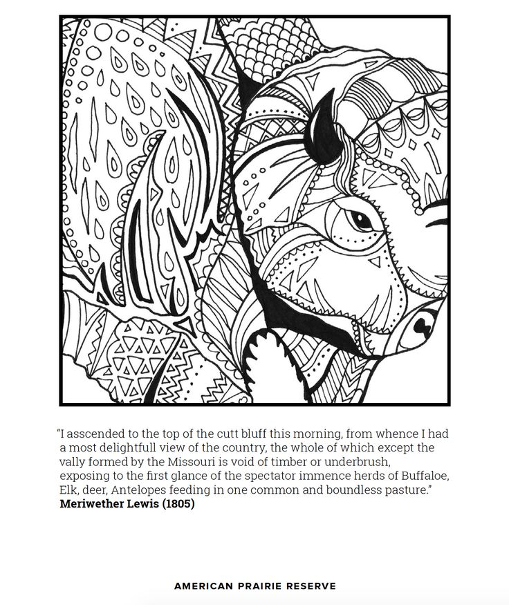 free buffalo coloring page to download and print at home or school quote