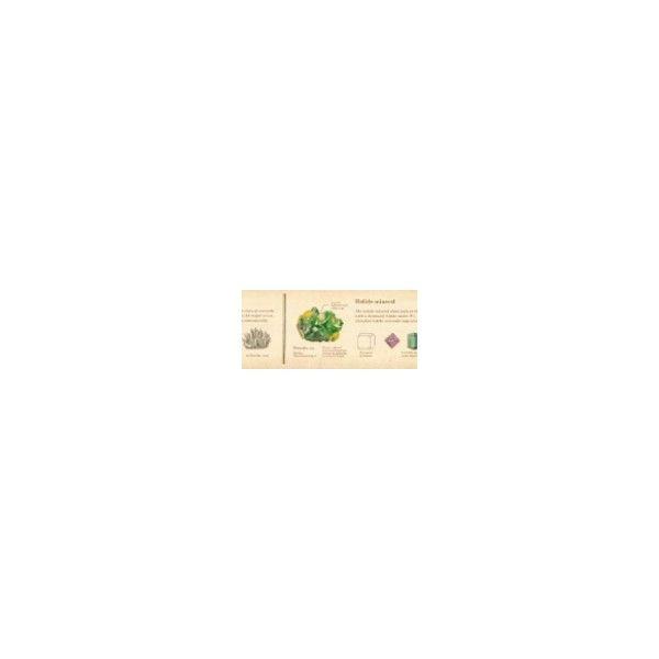 """Washi páska ze speciální edice MT EX s motivem """"encyklopedie minerály"""". Rozměry: 30 mm x 10 m Made in Japan"""