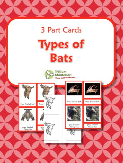 Bats Cover Montessori 3 part Cards Free Printable