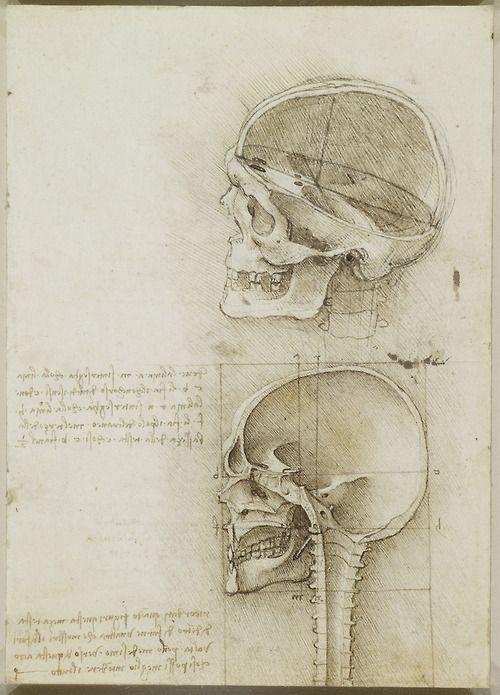 Leonardo da Vinci (Vinci 1452-Amboise...