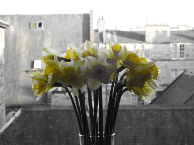 Leith Spring Daffies!