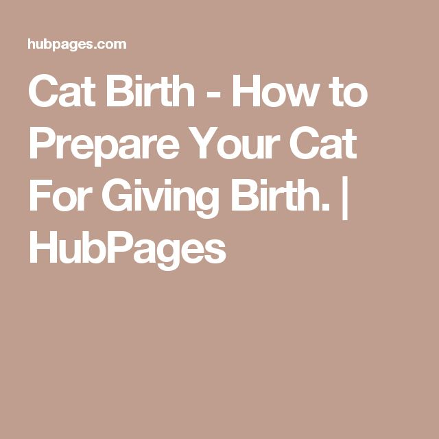 Cat Birth - How to Prepare Your Cat For Giving Birth. | HubPages