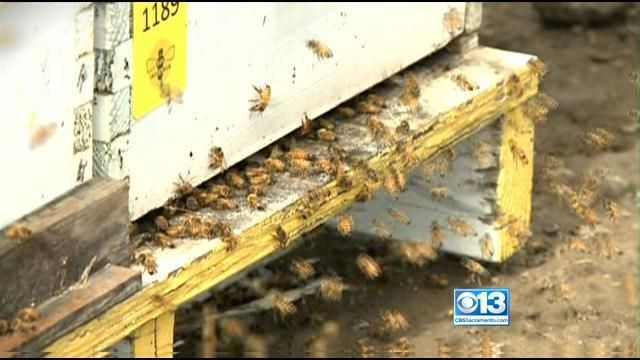 Honey Price Increases Lead to Jump In Beehive Thefts - CBS Sacramento
