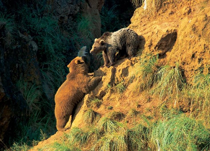 Parque de la Naturaleza de Cabárceno    #Cantabria #Cabarceno #Naturaleza #Animales #Oso #Nature #Animals #Bear #Cantur #Spain