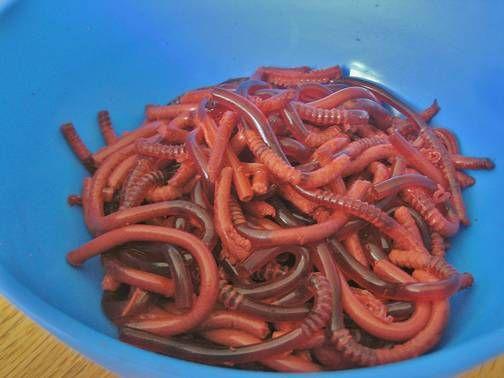 Selber machen: Würmer für zu Hause