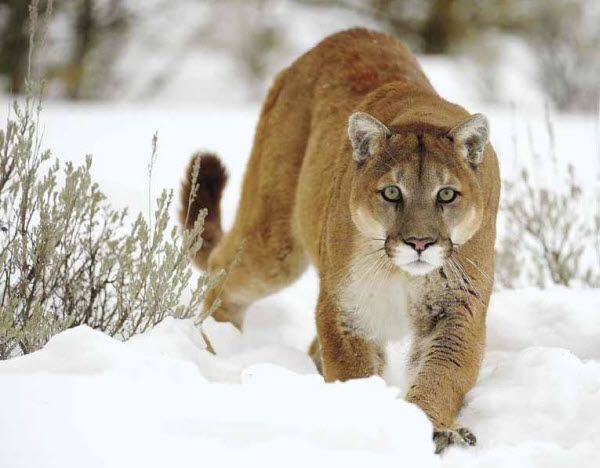 North American Wildlife Photography | These photos of North American wildlife will leave you amazed.