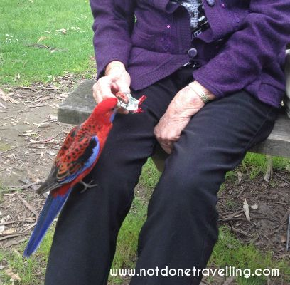 Gorgeous rosella at Hanging Rock, Victoria, Australia. Read more: http://www.thelostlemurian.com/2015/05/the-truth-about-hanging-rock/