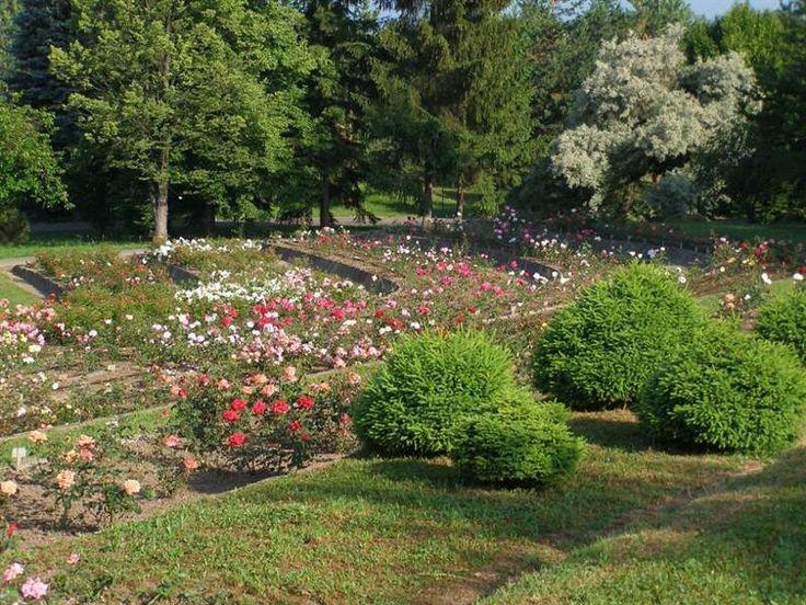 Arborétum Borová hora 1