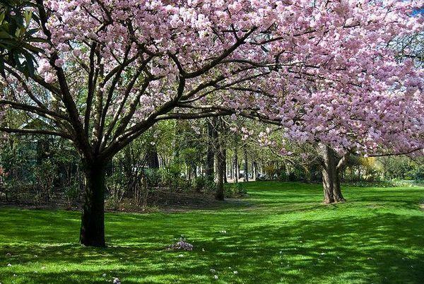 Paisajes hermosos de paris imagui for Paisajes de jardines
