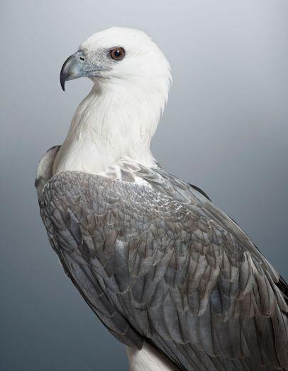 Leila Jeffreys Photographie Des Portraits D'oiseaux Exotiques                                                                                                                                                                                 Plus