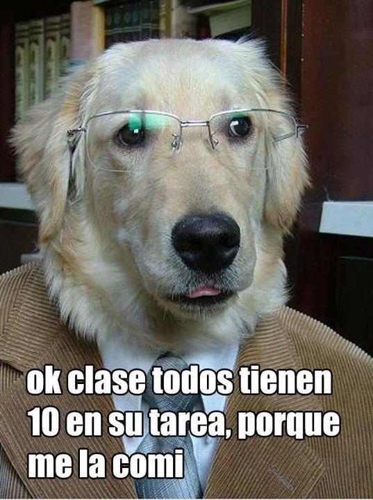 El perro comió la tarea.  Ja ja ja #frases #chistes Repinned by http://www.Basic-Spanish-Words.com/