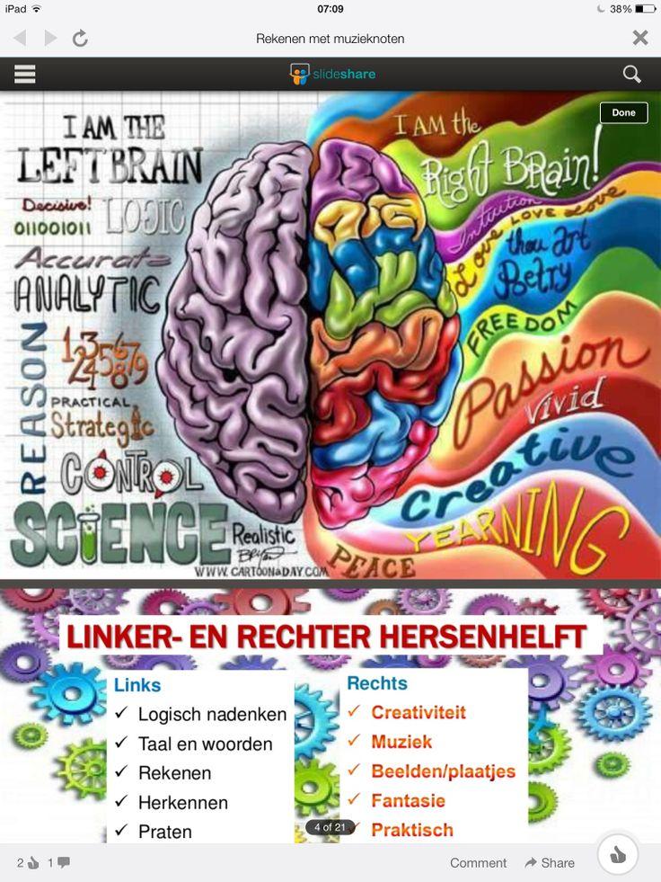 Verdeling linker- en rechter hersenhelft
