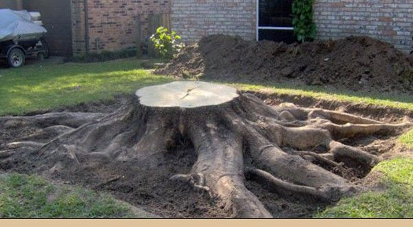 how to get rid of wasp nest in tree stump