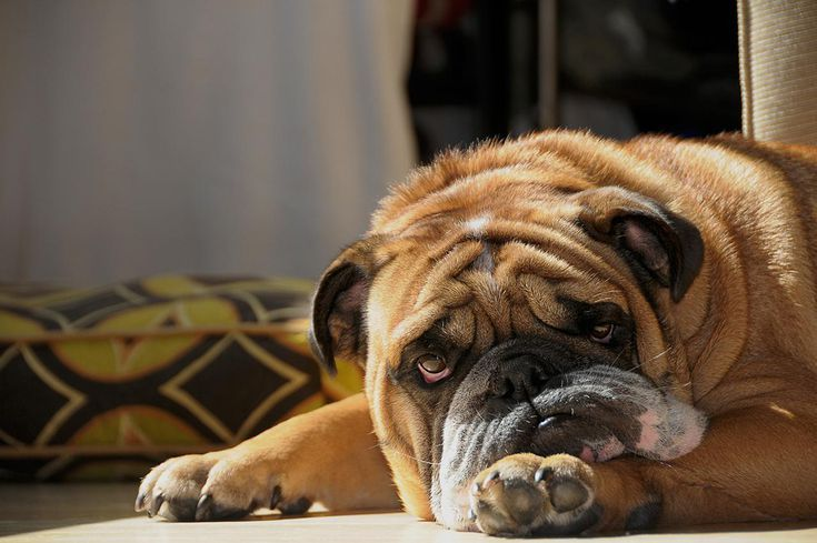 What To Do When Your Dog Vomits Dogs Sick Dog Cat Urine