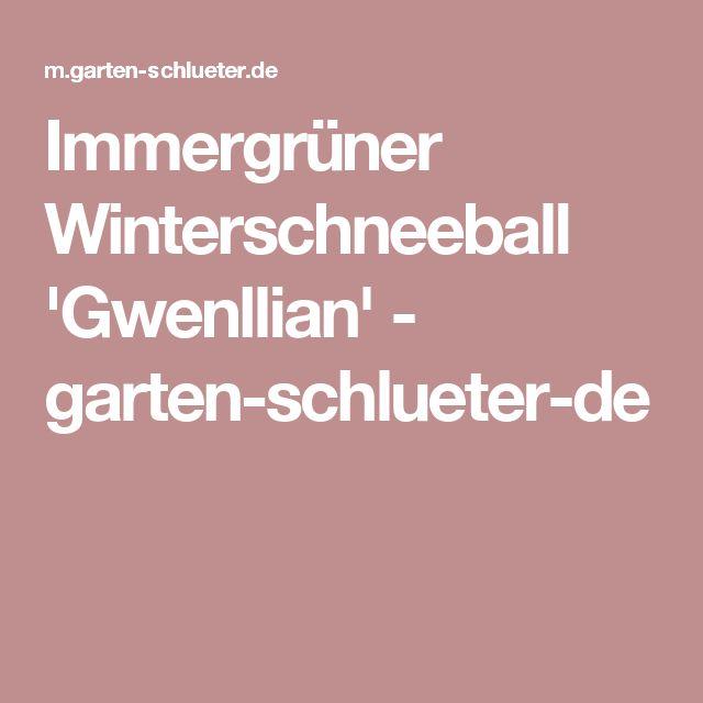 Immergrüner Winterschneeball 'Gwenllian' - garten-schlueter-de