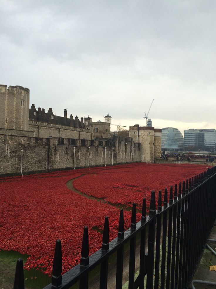 Poppies @ Tower of London.