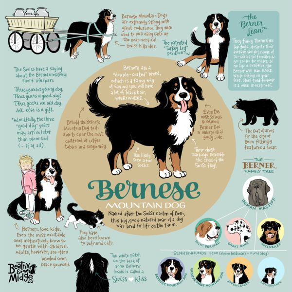 Share a bit of Berner knowledge with everyone who enters the room! To see details, hover over the image. Museum-quality posters made on thick, durable, matte pa